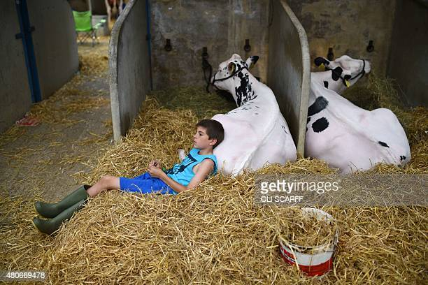 A boy sits with his holstein cattle on the first day of the Great Yorkshire Show near Harrogate northern England on July 14 2015 The agricultural...