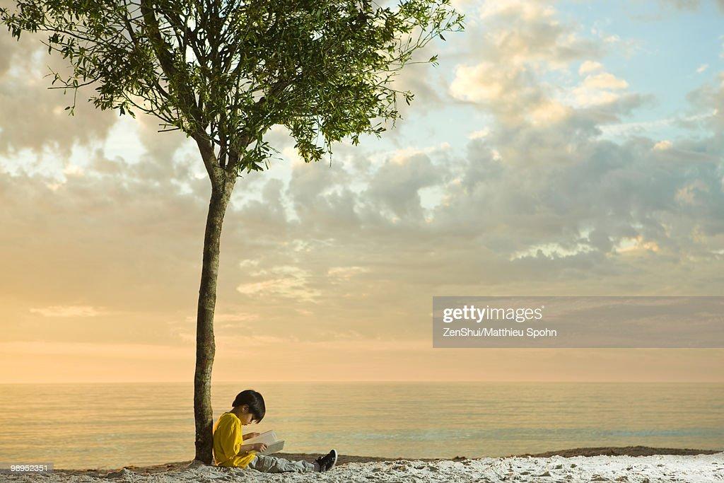 Boy sitting beneath tree on beach reading book : Stock Photo