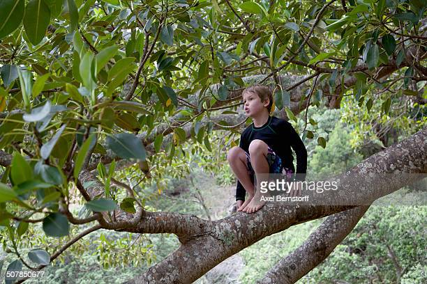 Boy sitting in tree and gazing
