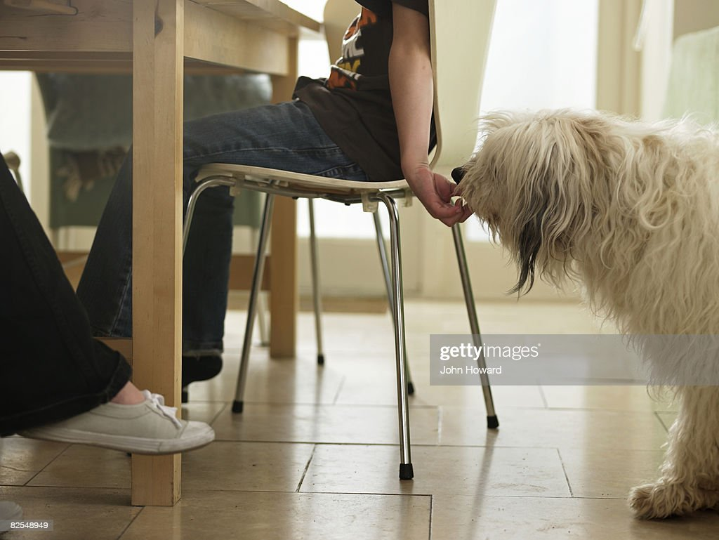 Boy sneaking dog food from the table : Stock Photo