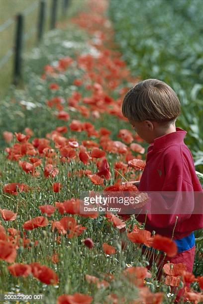 Boy (4-7) standing in flower garden, side view