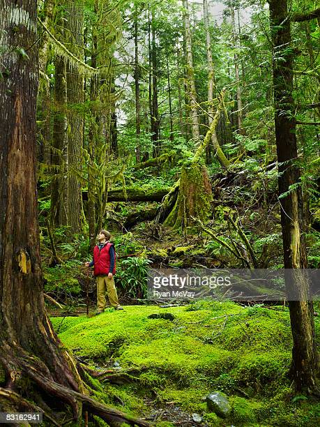 Boy standing in forest looking up.