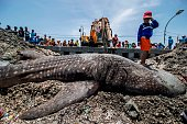 A boy stands on the carcass of a dead whale shark caught by fishermen in the sea off of Surabaya on the East Java island on October 12 2015 Fishermen...