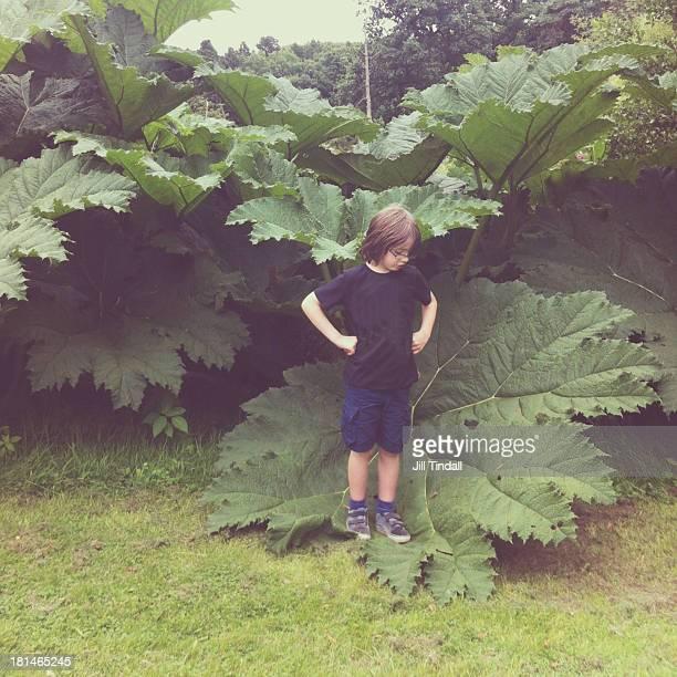 Boy stood on a huge leaf