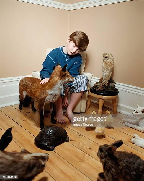 Boy stroking stuffed animals