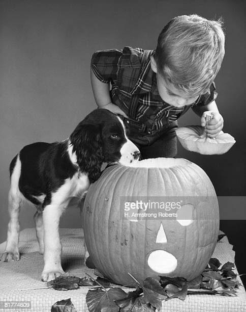 Boy taking lid off of Halloween jack-o-lantern and looking down inside, puppy standing next to boy.