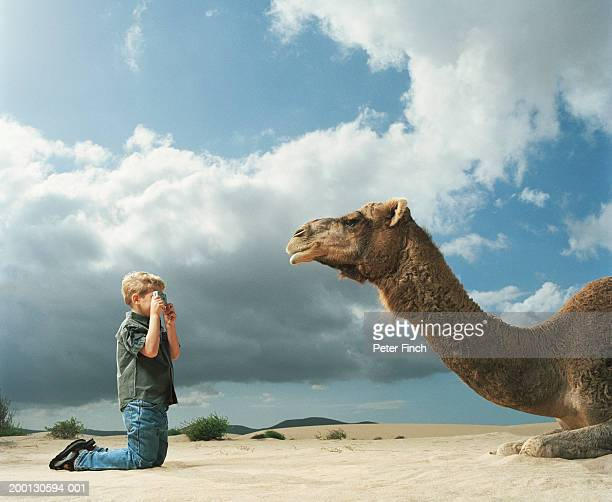 Boy (9-11) taking photograph of camel