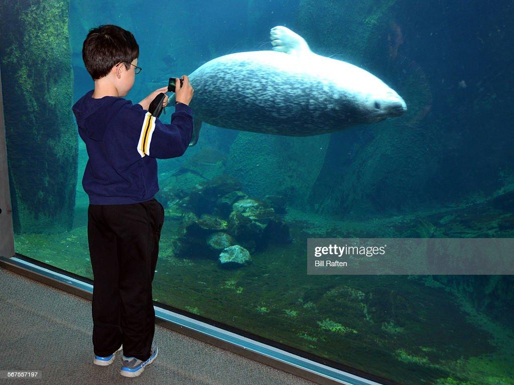 Boy Taking picture of Steller sea lion