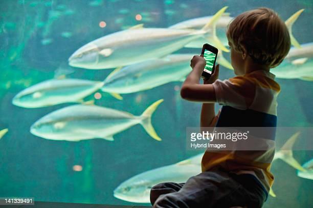 Boy taking pictures of fish in aquarium
