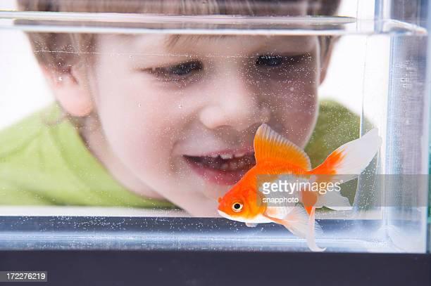 Boy talking to little goldfish