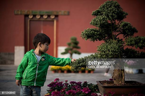 A boy touches the leaves of a plant inside the Forbidden City in Beijing on September 29 2016 China celebrates 'Golden Week' on October 1 with a...