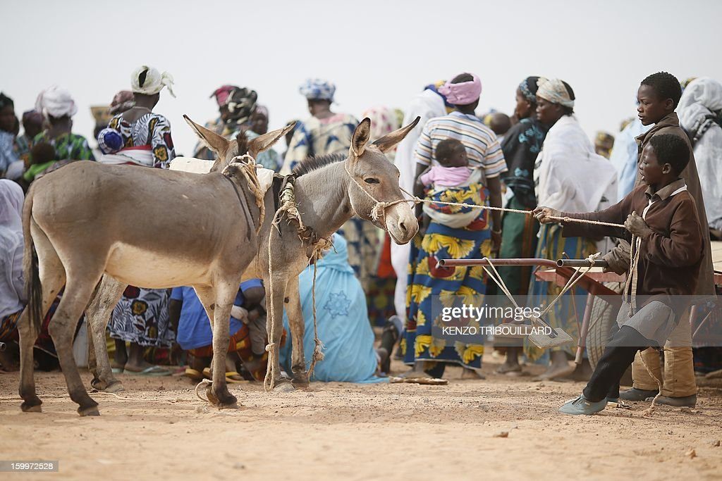 A boy tries to pull a donkey next to refugees on January 24, 2013 at a refugee camp set in Menteao near the Malian border. The conflict in Mali has caused nearly 150,000 people to flee the country, while about another 230,000 are internally displaced, the UN humanitarian agency said on January 15, 2013. According to OCHA, the UN High Commissioner for Refugees has registered 144,500 refugees in neighbouring countries -- 54,100 in Mauritania, 50,000 in Niger, 38,800 in Burkina Faso and 1,500 in Algeria.