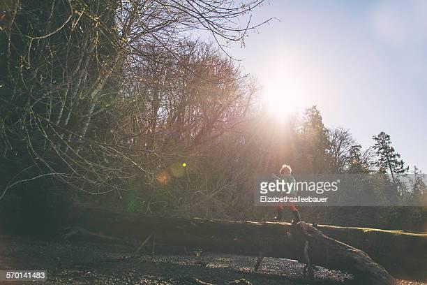 Boy walking up a tree trunk