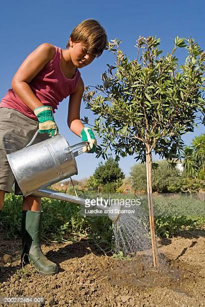 Boy (9-11) watering sapling in garden