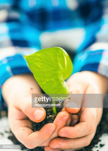 boy with green plant : Stock Photo