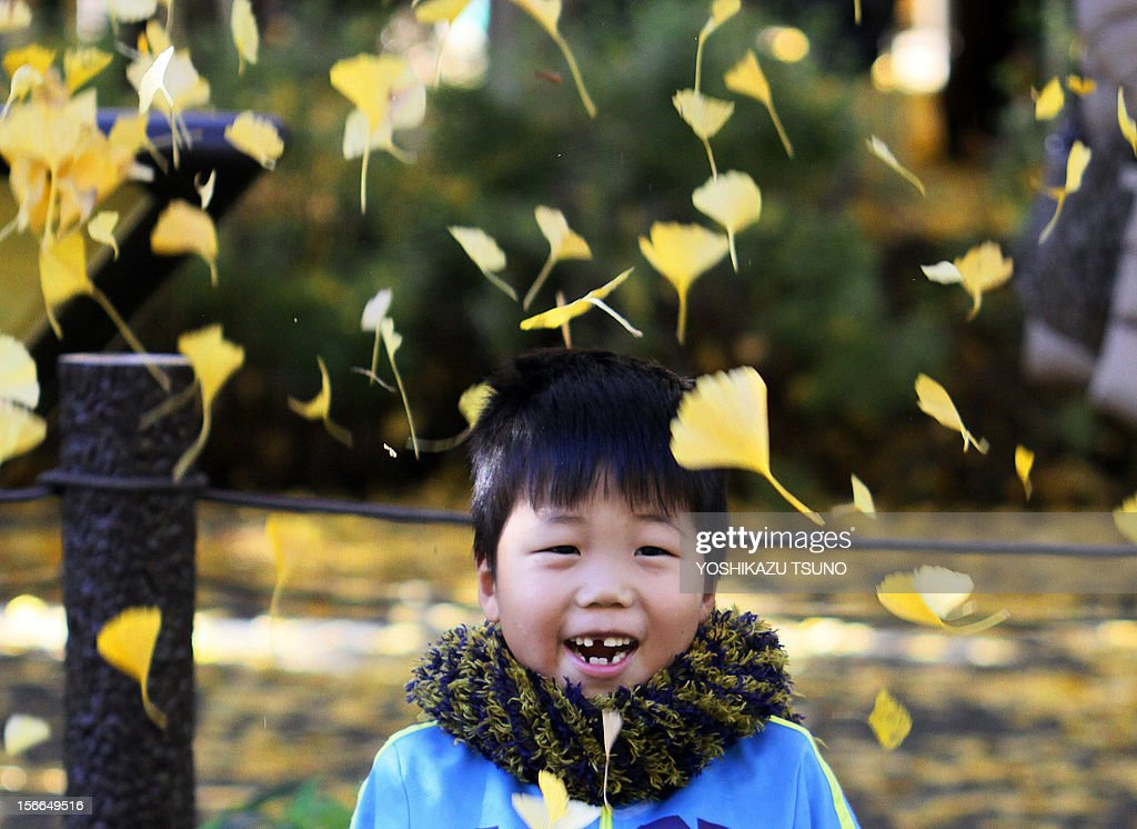 A boy with yellow ginkgo tree leaves in Tokyo on November 18, 2012. Local residents came out to admire some 150 ginkgo trees displaying their autumnal colors along the tree-lined promenade. AFP PHOTO / Yoshikazu TSUNO