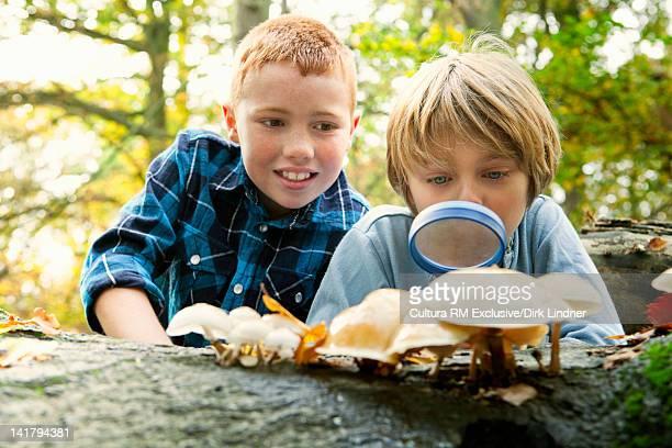 Boys examining mushrooms in forest