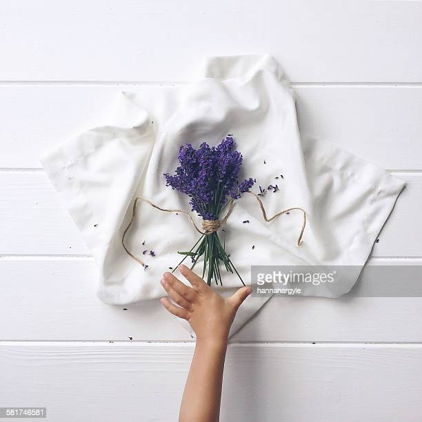 Boy's hand reaching for a bunch of fresh lavender