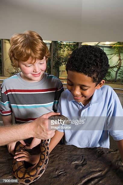 Boys looking at snake