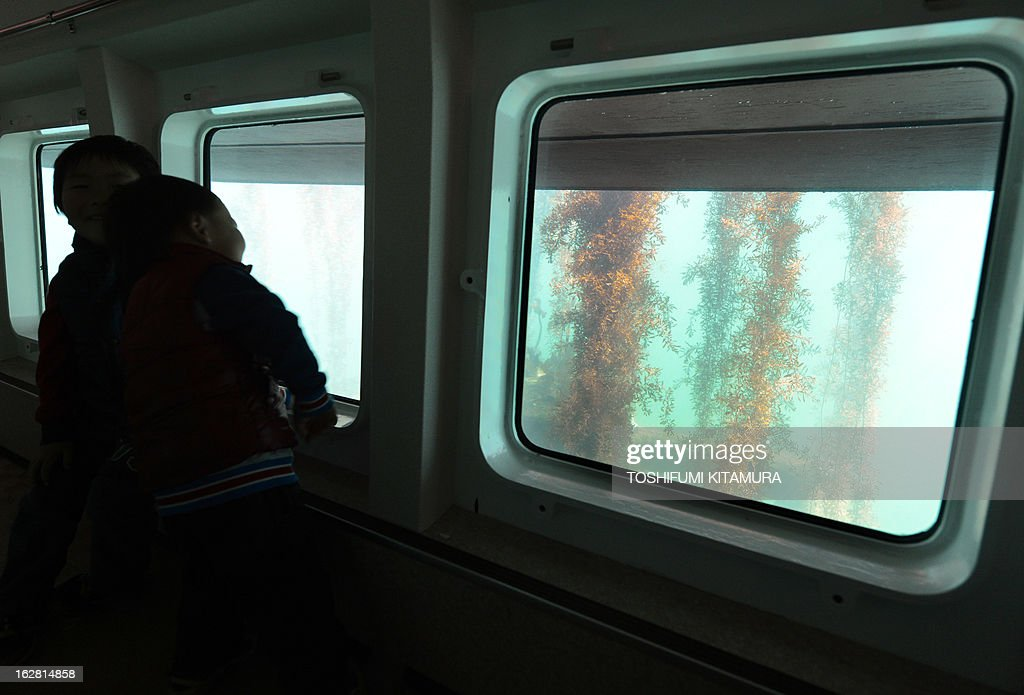 Boys watch seaweeds grow from a glass bottom boat during a press preview of Yokohama Hakkeijima SeaParadise's new attraction facilities, 'Umi Farm,' or Sea Farm in Yokohama on February 28, 2013. The 'Umi Farm' opens on March 8 and will teach children about the ocean's ecological nature as well as fishing or hunting fish.