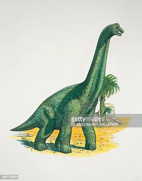 Brachiosaurus dinosaur in a forest