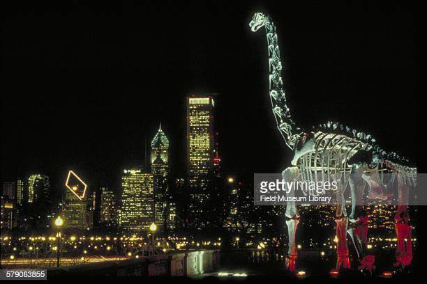 Brachiosaurus outside Field Museum building at night with Chicago city skyline behind
