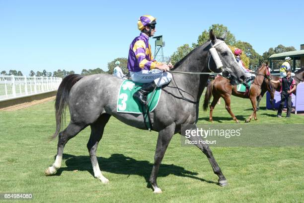 Brad Rawiller returns to the mounting yard on It's Pa after winning Robert Rose Plate at Yarra Valley Racecourse on March 19 2017 in Yarra Glen...