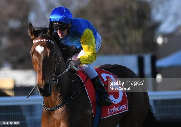 Brad Rawiller riding Black Heart Bart heads to the start of Race 7 PB Lawrence Stakes during Melbourne Racing at Caulfield Racecourse on August 19...