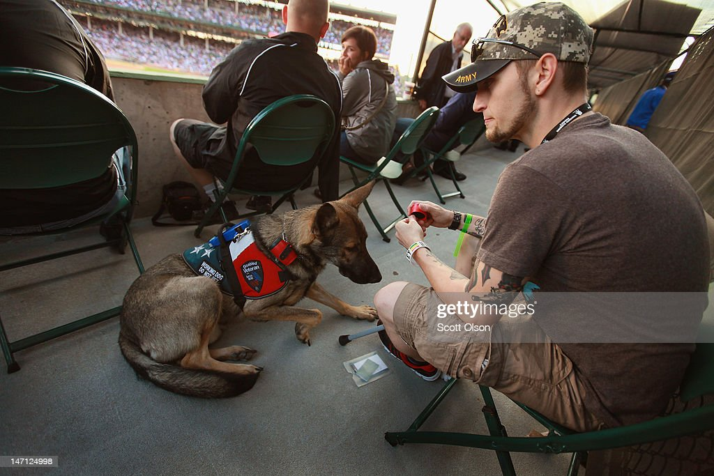 Brad Schwarz, with his service dog Panzer, attends a Chicago Cubs' game with a group of veterans from the Wounded Warrior Project at Wrigley Field on June 14, 2012 in Chicago, Illinois. Schwarz uses Panzer to help him cope with post-traumatic stress disorder (PTSD) issues related to his 2008 tour in Iraq. In addition to suffering from PTSD Schwarz has memory loss related to Traumatic Brain Injury (TBI) and he must walk with a cane because of vertebrae and nerve damage in his back and legs. Ten days before he was scheduled to rotate home from a 15-month deployment in Iraq, his second, the Humvee in which he was riding was struck by an Improvised Explosive Device (IED). Of the 5 soldiers riding in the vehicle, which caught fire after the explosion, Schwarz was the only one to survive.