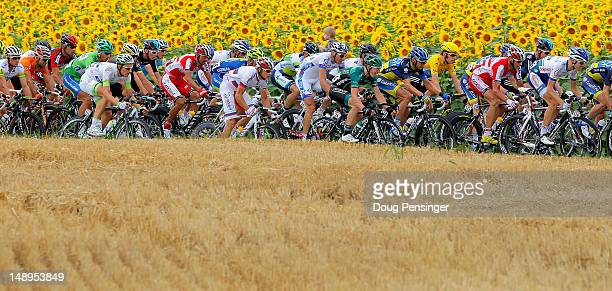 Bradley Wiggins of Great Britain riding for Sky Procycling rides in the peloton as they pass through sunflower fields during stage eighteen of the...