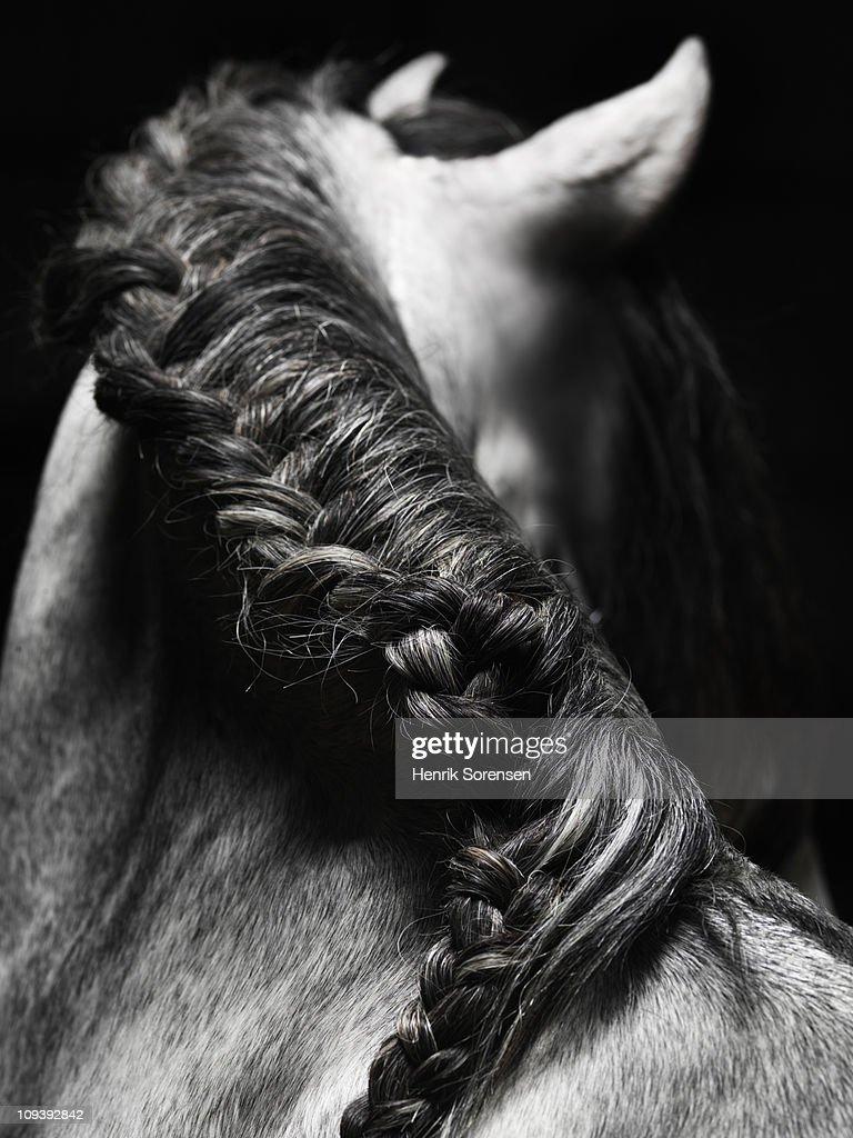 Braided mane of grey horse : Stock Photo