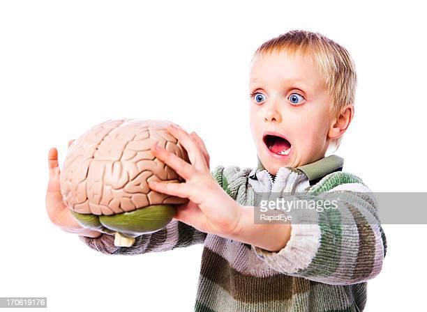Gehirn Grauen