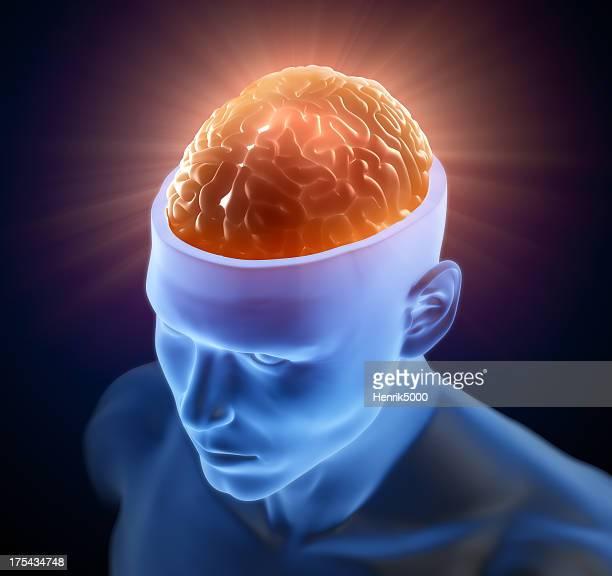 Brain inside head