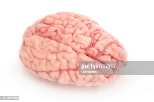 脳の白で分離