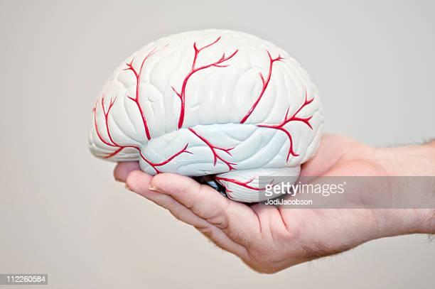 Gehirn Model im Freien