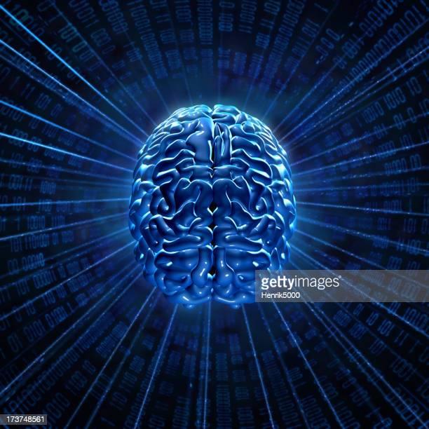 Gehirn-Netzwerk