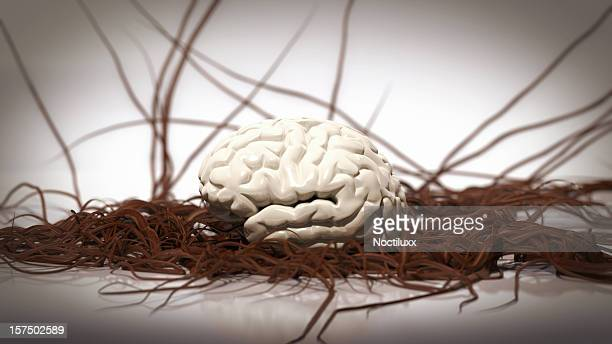Brain with growing veins and arteries