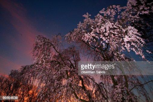 Branch Brook Park, Newark, NJ : Stock Photo