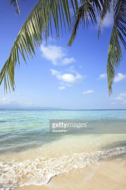 Succursale d'un palmier à la plage.