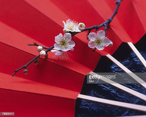 Branch of cherry flowers on Japanese folding fan, high angle view, close up