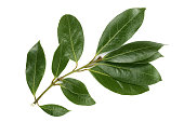 A branch of laurel isolated on white background. Fresh bay leaves. Top view.