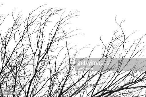Branch Veins