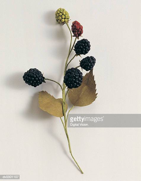 Branch with berries