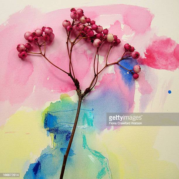 branch with pink berries on watercolour painting