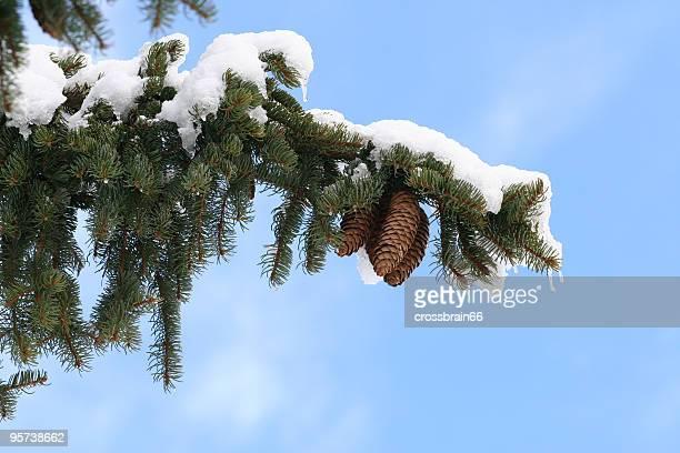 Branche avec neige