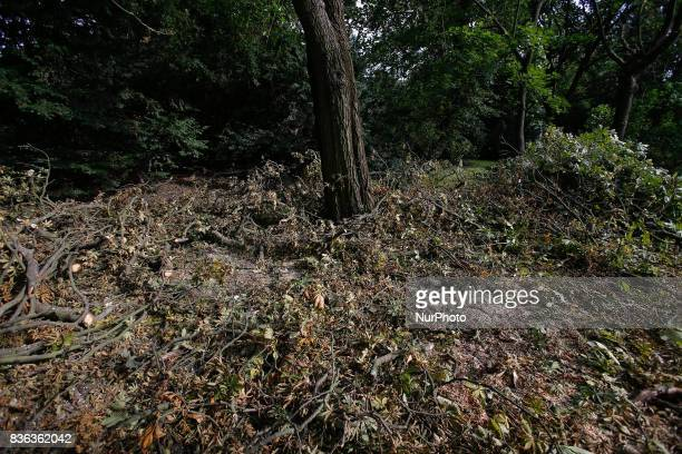 Branches cut from fallen tree parts are seen on 19 August 2017 Over 100 thousand acres of woodland in Poland have been heavily damaged by recent...