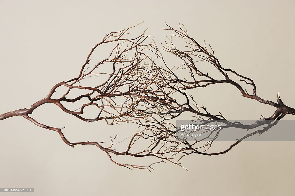 Branches forming network, studio shot : Stock Photo