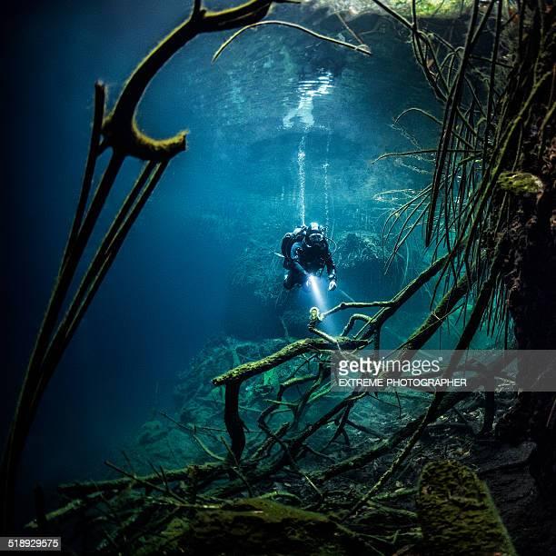 Branches dans l'eau