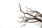 Tree branches have been set against a mostly white background