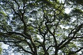 Branches of big trees background